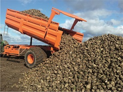 Semitrailer for sugar beets transportation PTL-24C